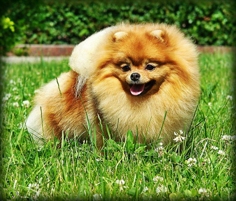 Beautiful Dog Pics