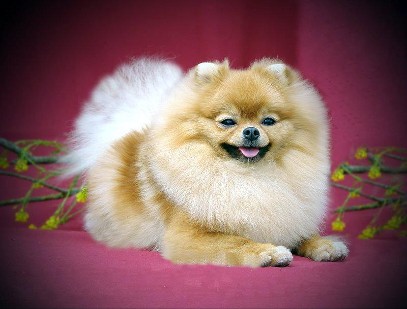 Cute Dogs Photos