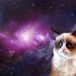 Grumpy Cat Images & Wallpaper