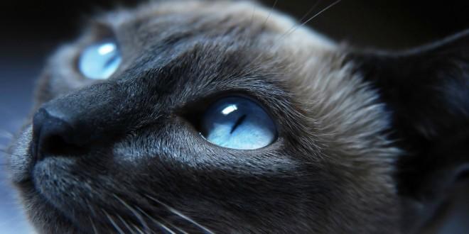 Grumpy Cat Photos & Wallpaper