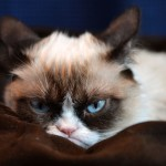 Grumpy Cat Picture & Wallpaper