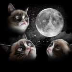 Grumpy Cat Pictures & HD Wallpapers