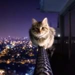 Grumpy Cat Pictures & Wallpaper