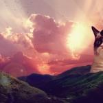 Grumpy Cat Pictures & image
