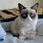 Grumpy Cat Pictures & images