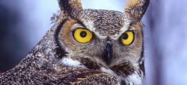 Owl Drk Hd Photos