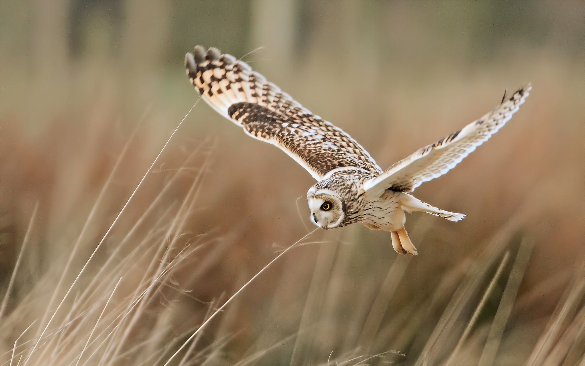 Owl Hd Pictures
