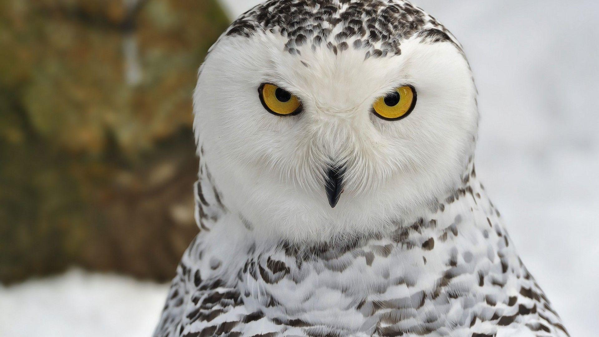 Black & White Owl Photos & wallpaper