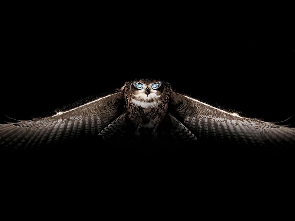 Owl Drk Wallpaper & Picture