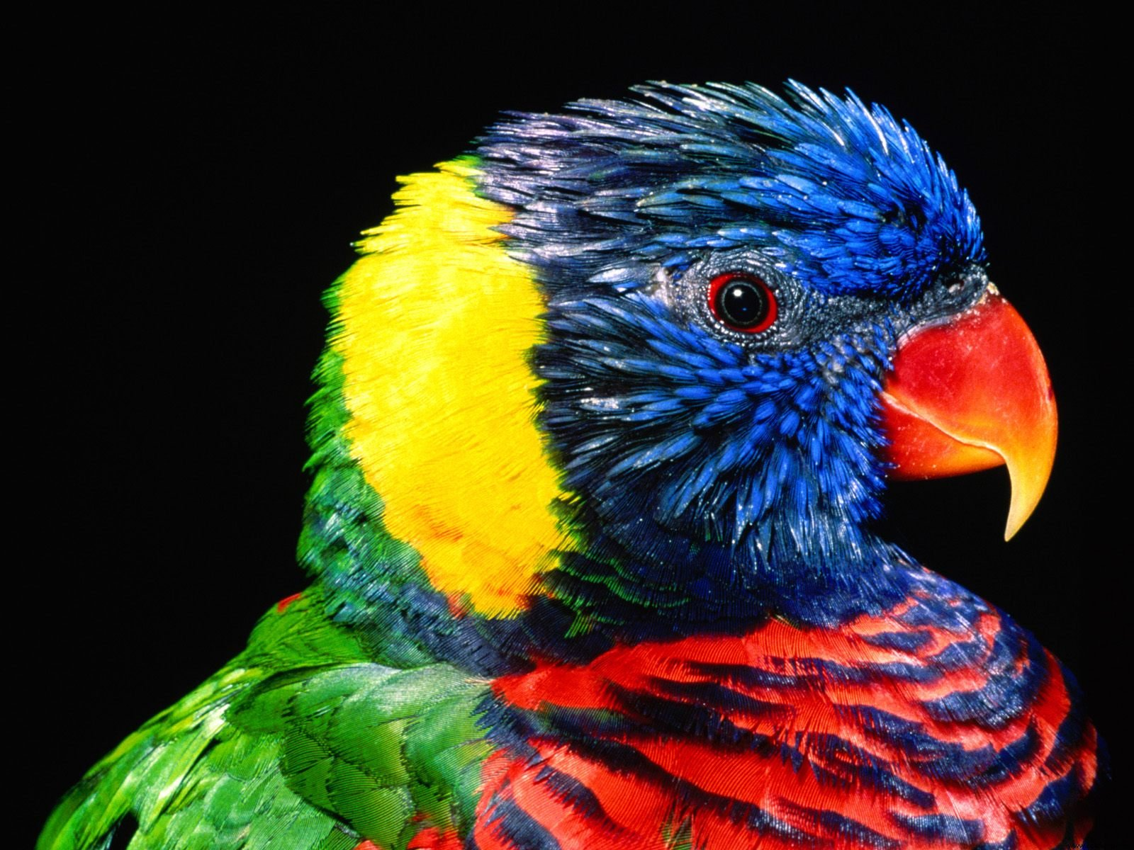 Beautiful Birds Image & Pictures