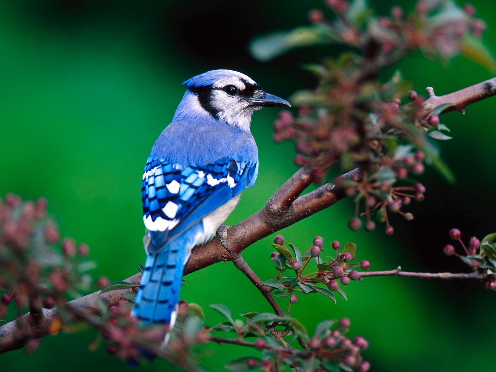 Beautiful Birds Wallpapers & Images