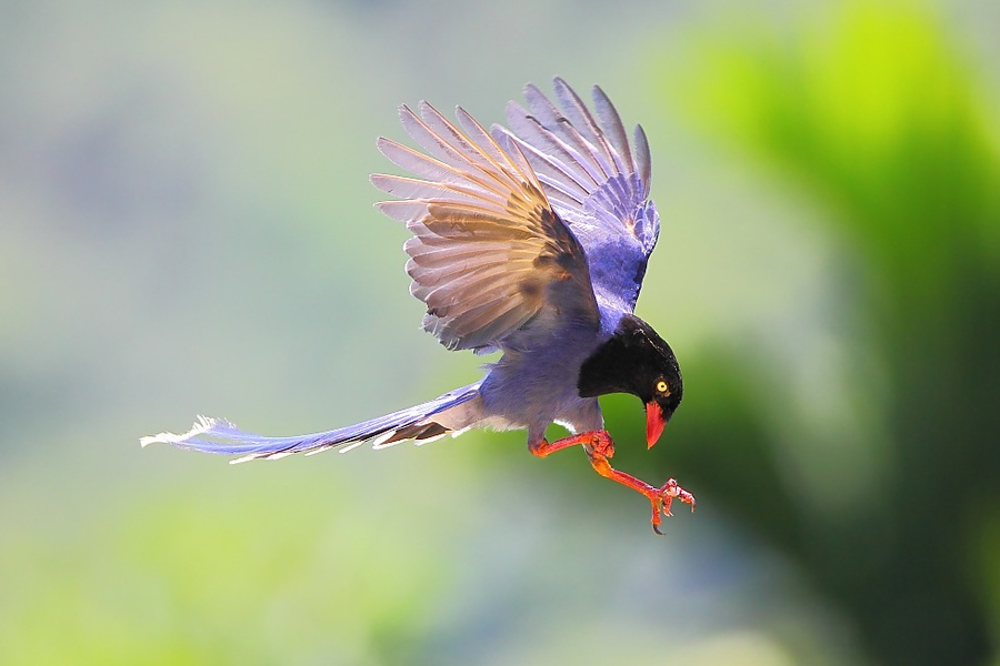 Beautiful Birds Wallpapers & Pix