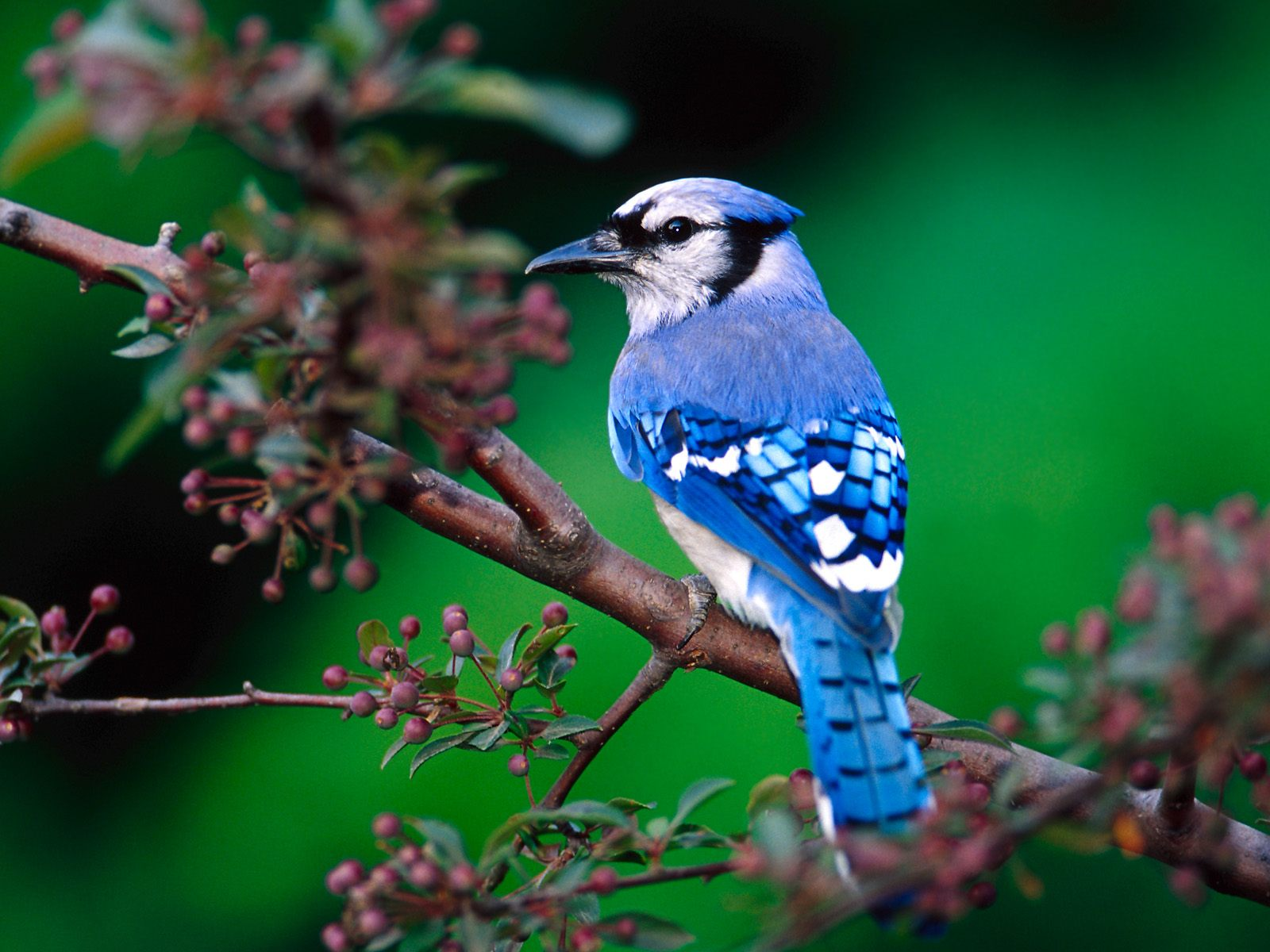 Beautiful Birds Wallpapers & Photos