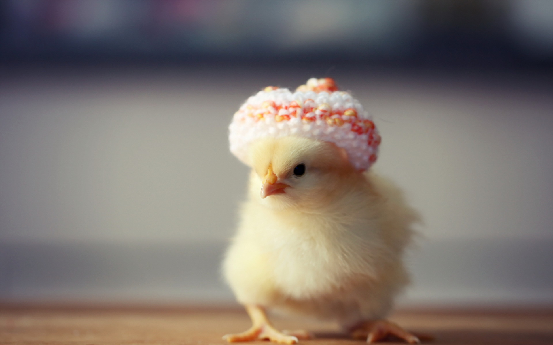 Chicken Images & Pictures