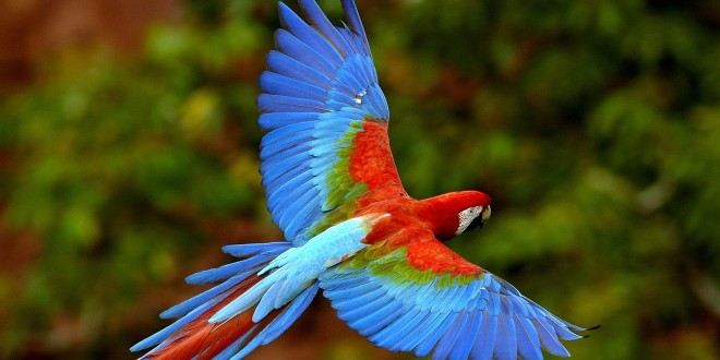 Exotic Bird Wallpaper