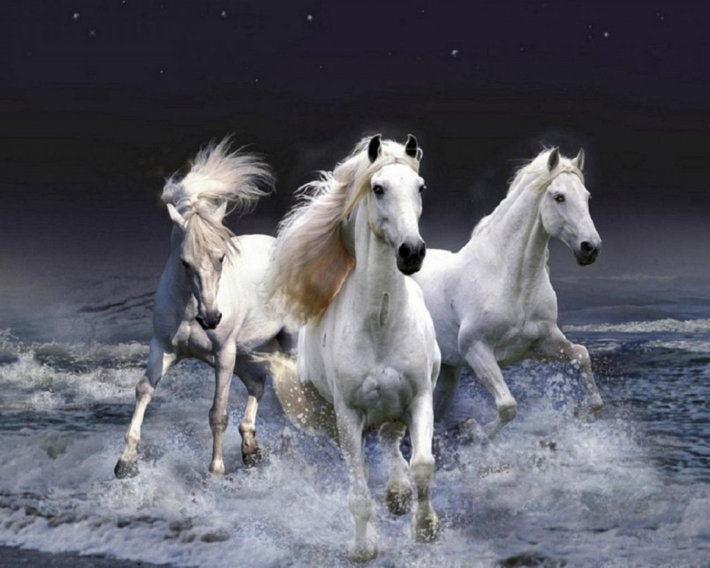 Horse Hd Wallpapers & Picture