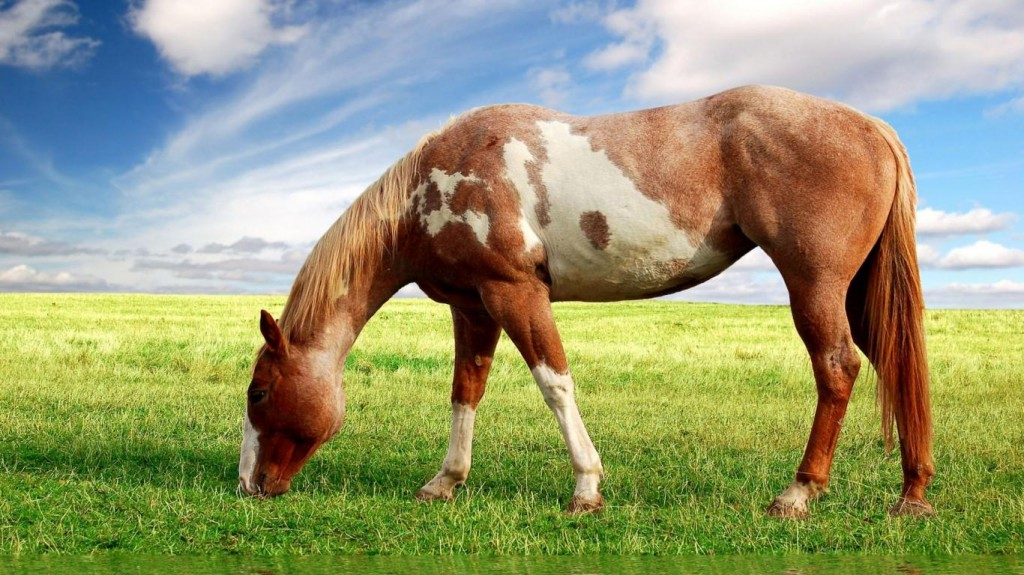 Horse Nice Pictures