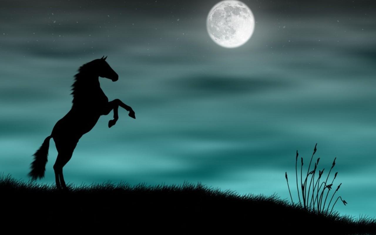 A Virtual Horse Pictures
