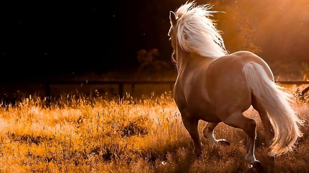 Horse Drawings in Running wallpaper & Images