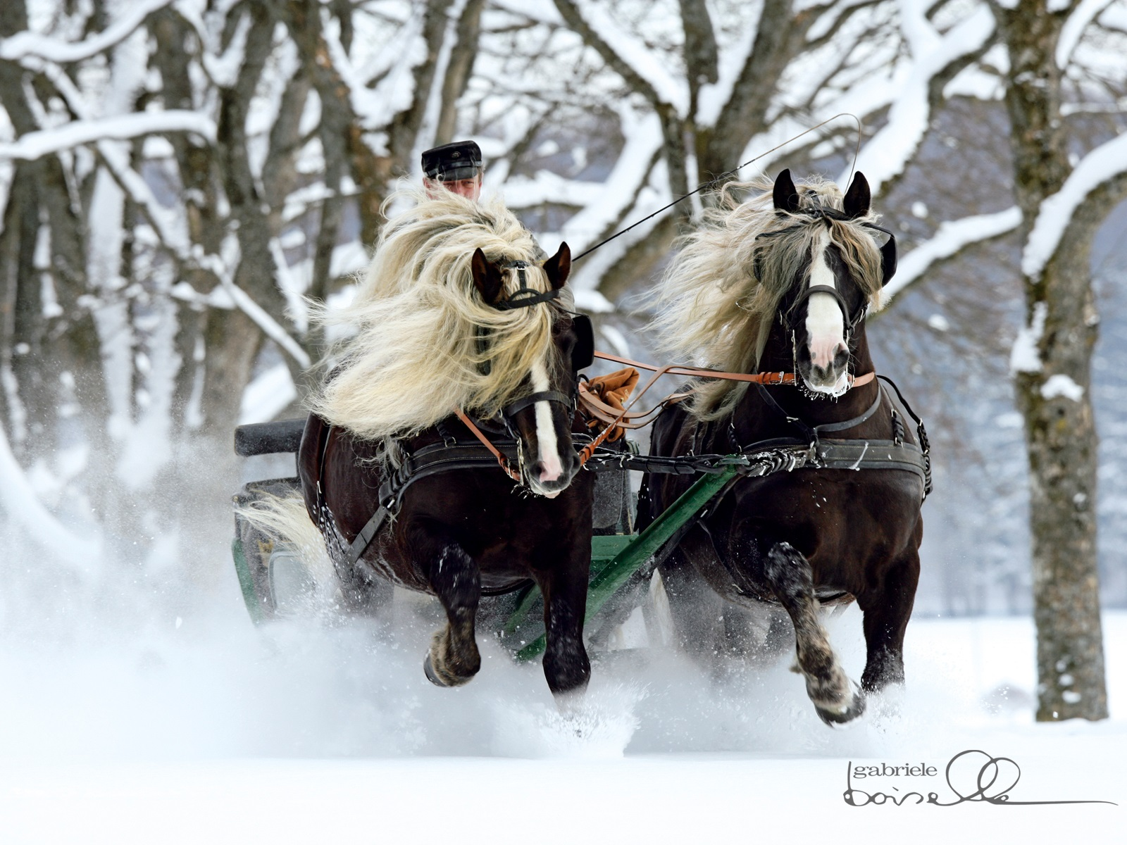 Horse Wallpapers & Pic