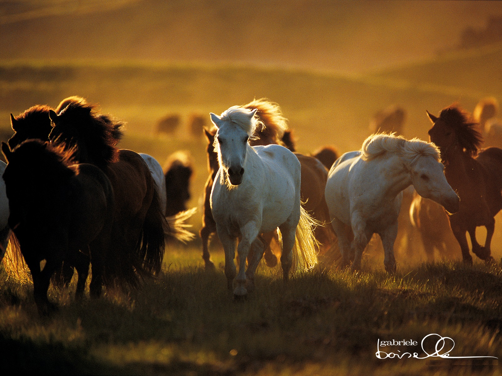 Horse Wallpapers & Picture
