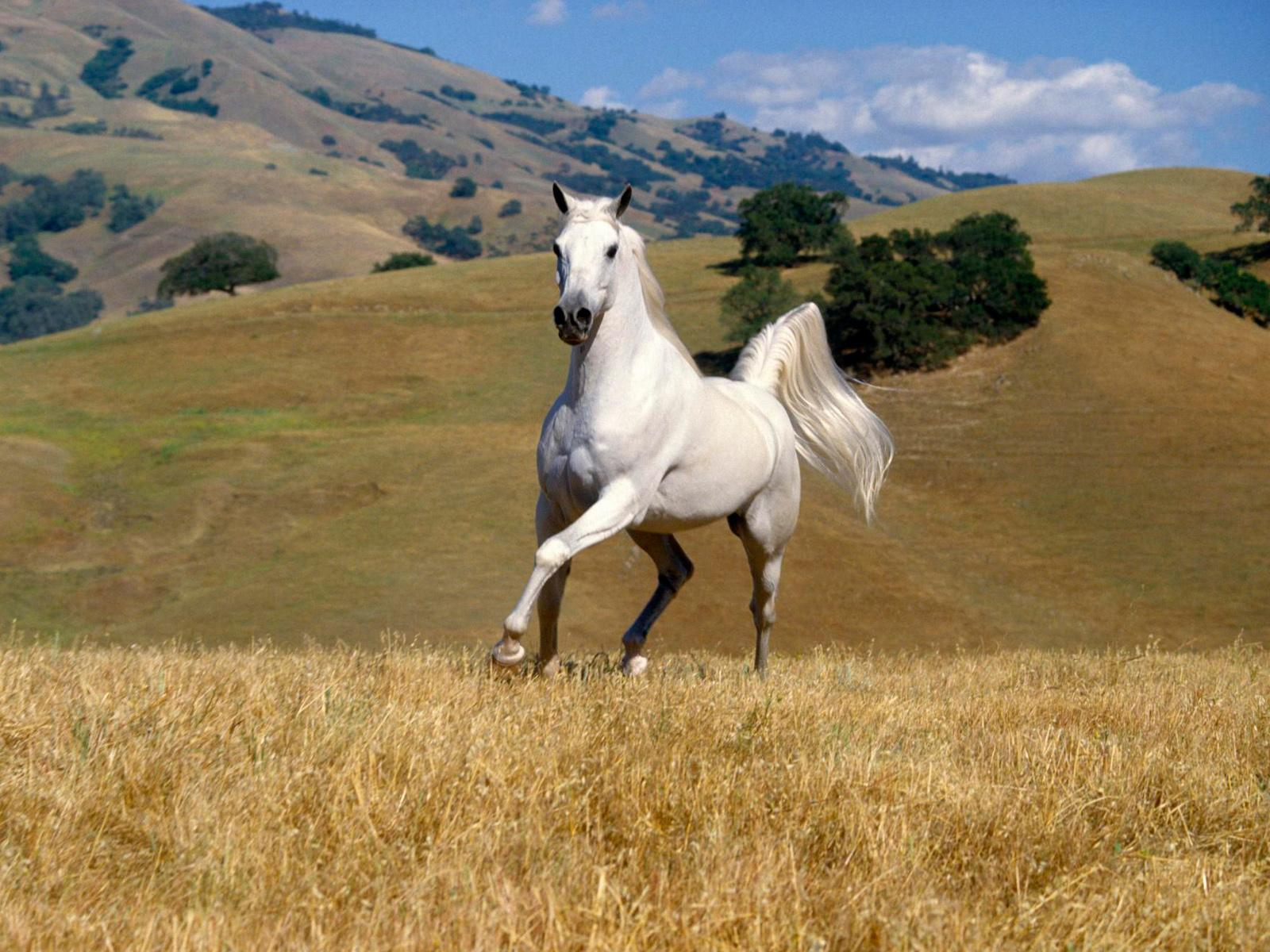 Singing Horses Wallpapers & Pictures