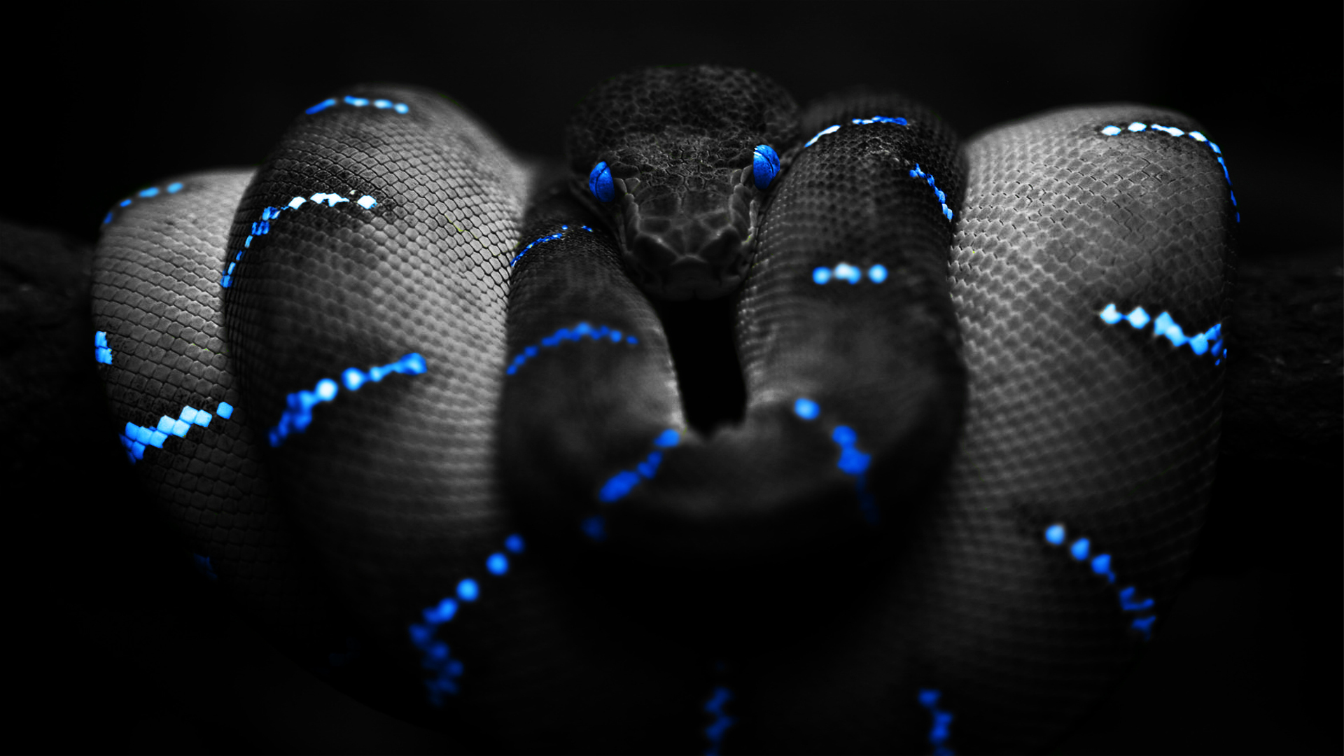 Snakes with Effect Pictures