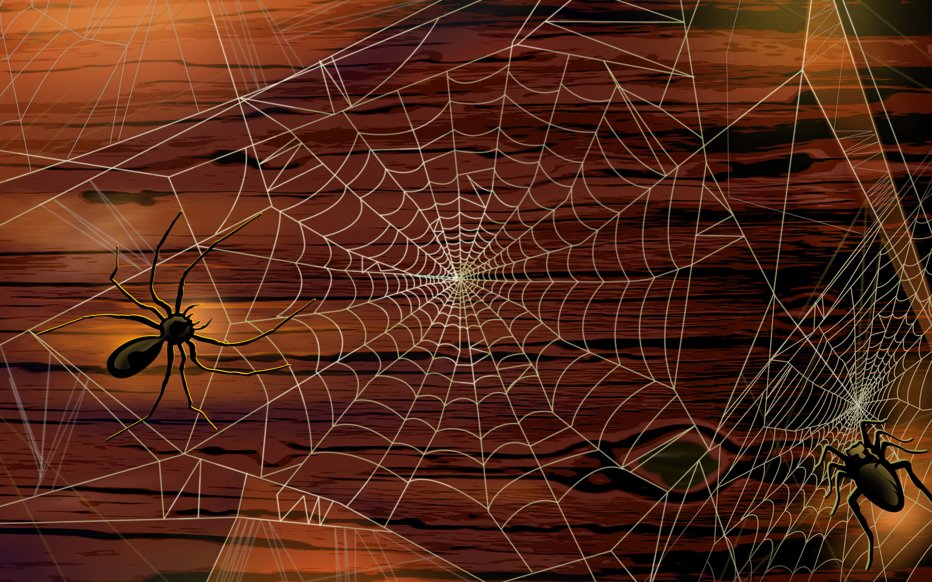 Spider HD  Picture