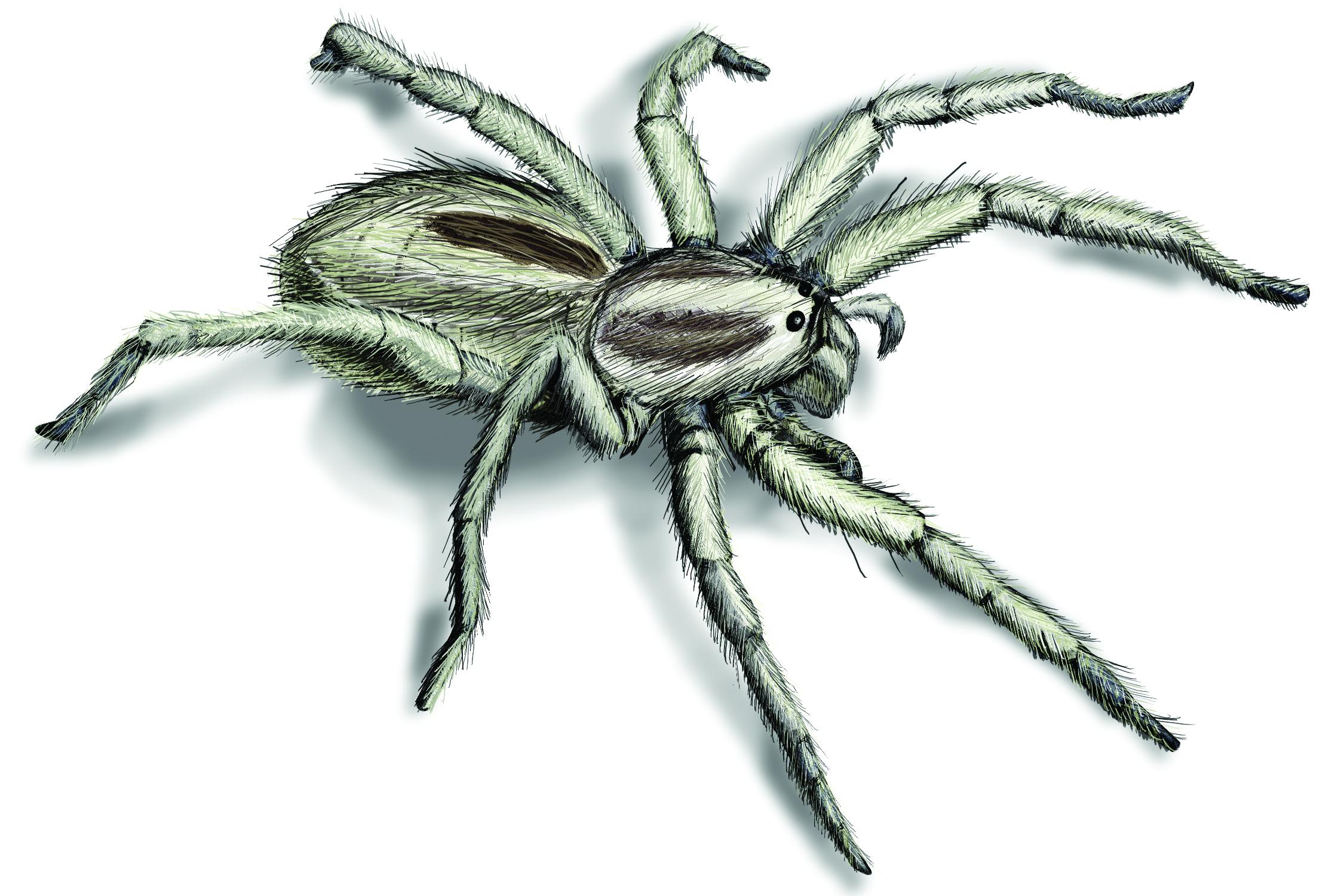 Spider Images & pix
