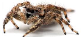 1920x1200 Tarantula Spider Close Up Animals/Insects,Close,spider,Tarantula