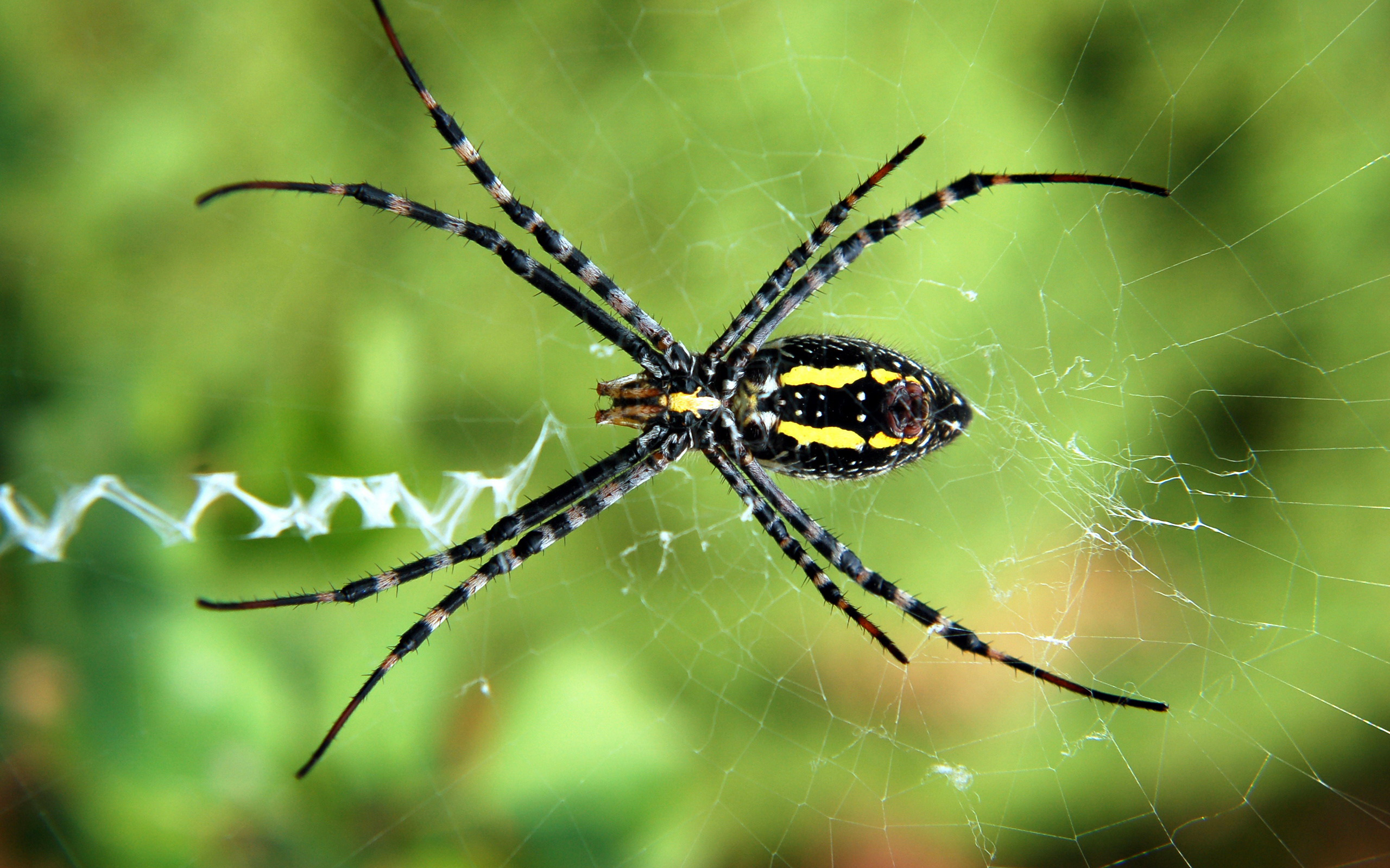 Spider  Wallpapers & Pictures
