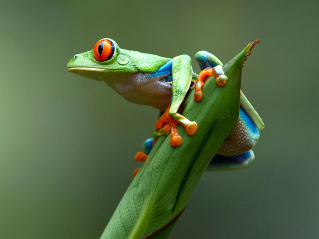 frogs hd photo