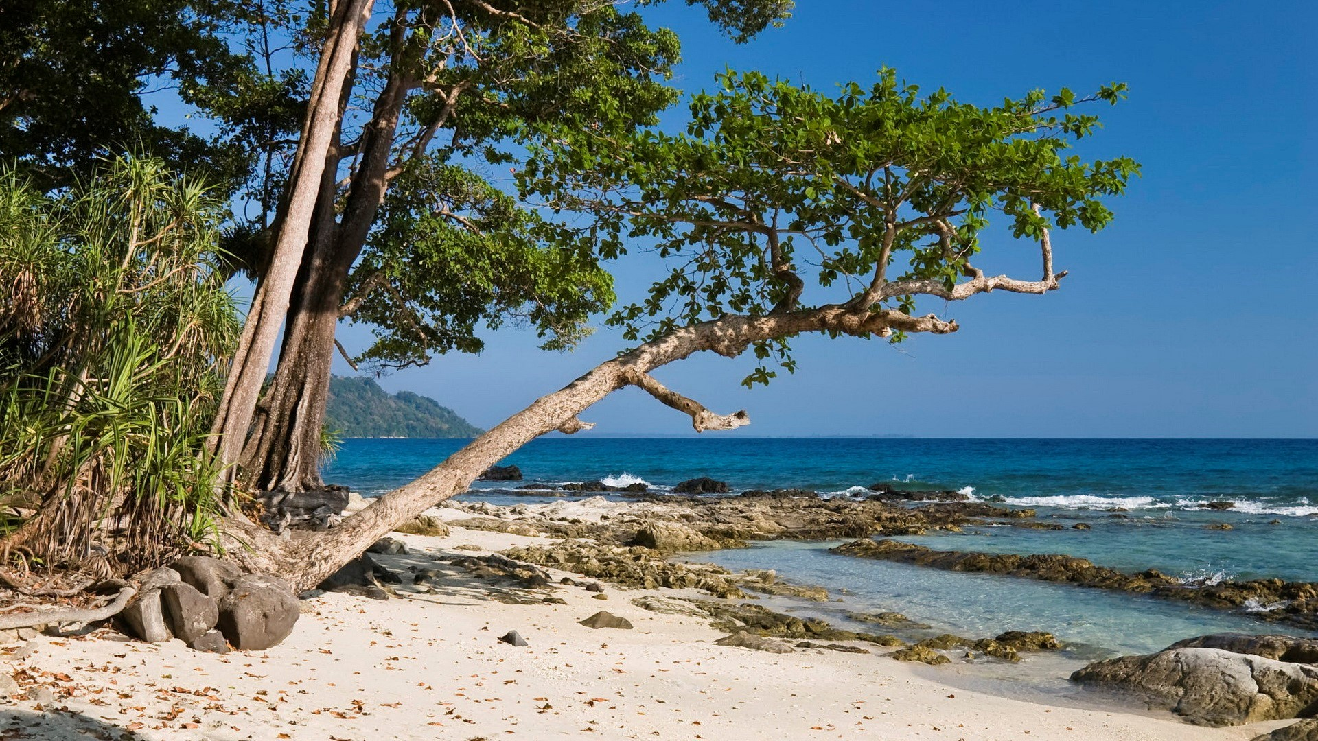 Tree on Beach Wallpapers