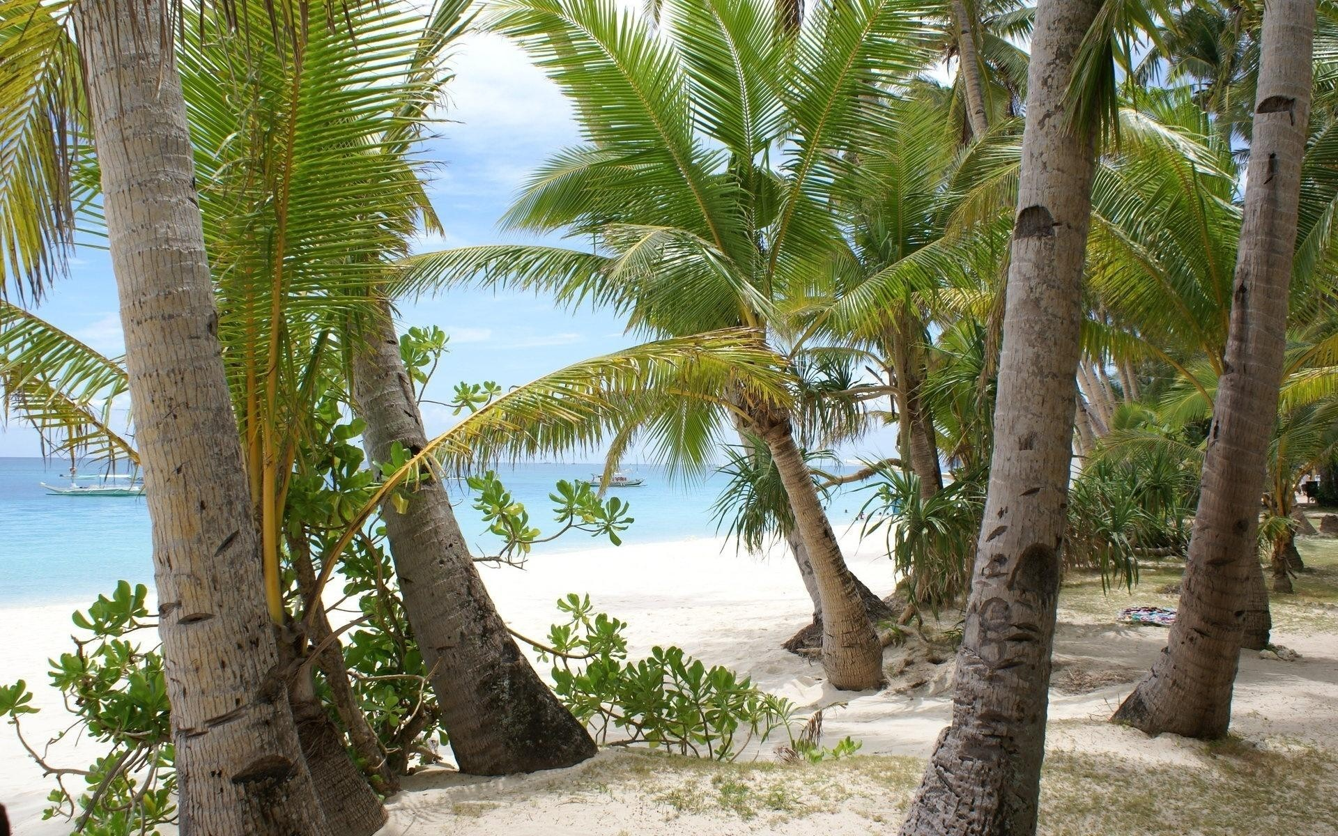 Cocont Trees at Beach Wallpaper