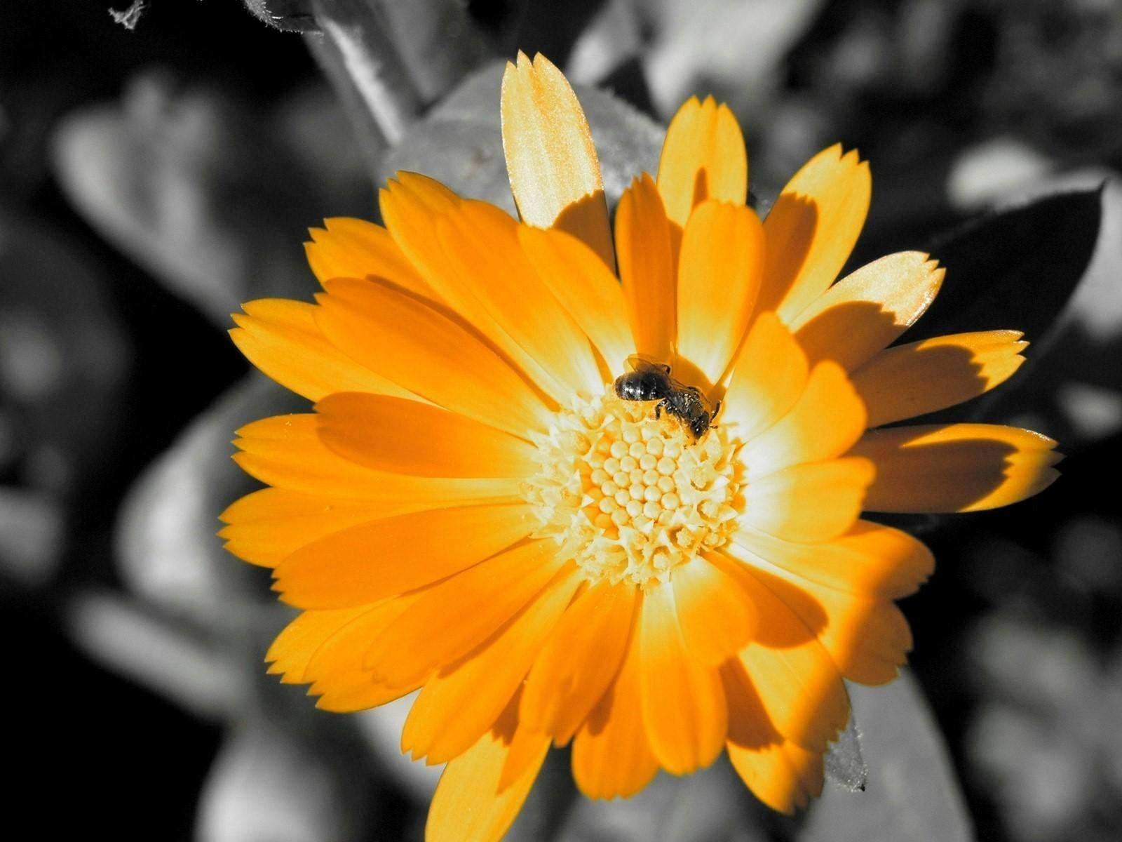 Beautiful Golden Flower  Image