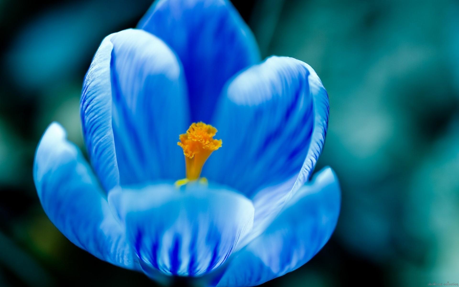 Blue Flowers Wallpaper Download