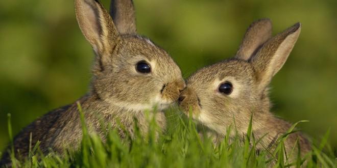 Cute-Rabbit-Gray