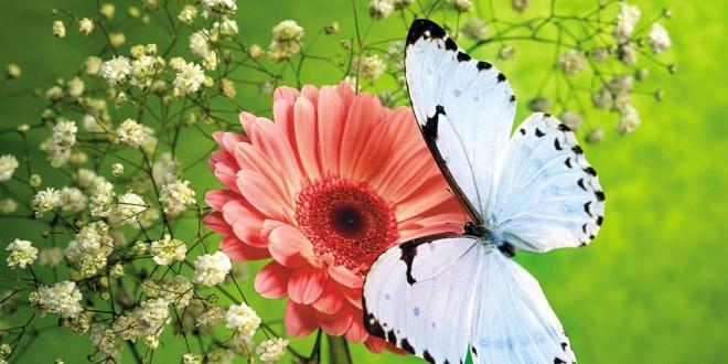 Desktop_flower__hd_wallpaper_259076074