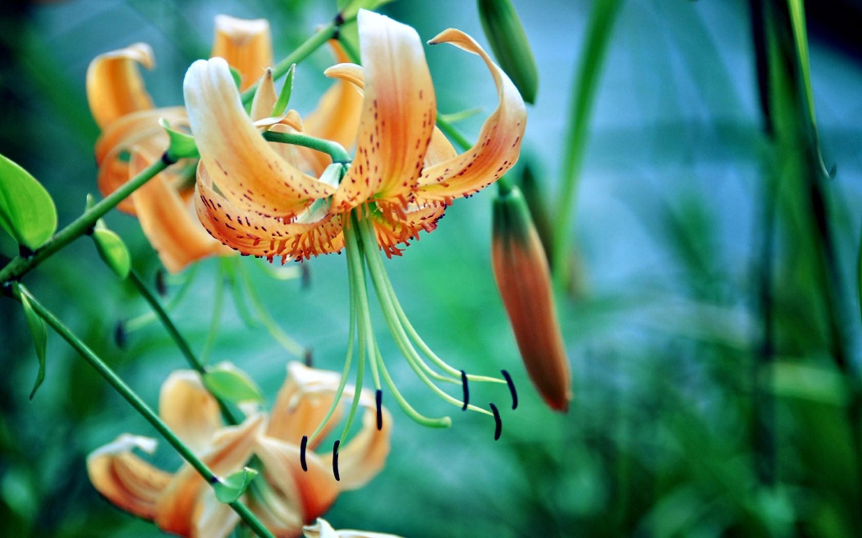 Flowers Hd Wallpapers Hd Wallpapers