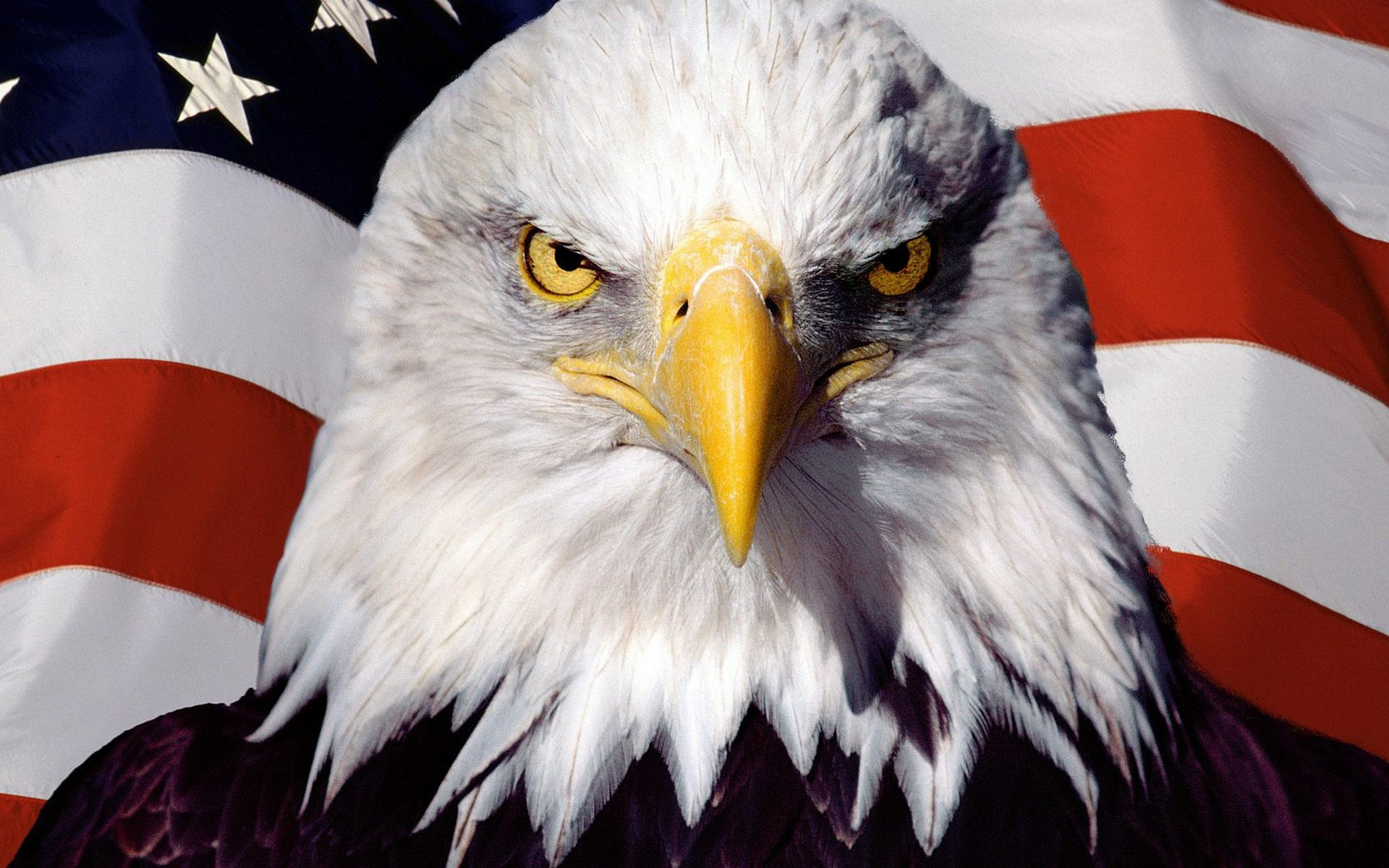bald eagle with us flag