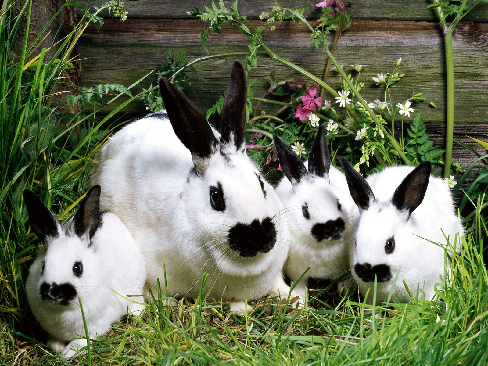 Rabbits Images
