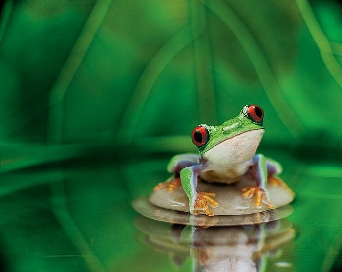 cute frog hd wallpaper