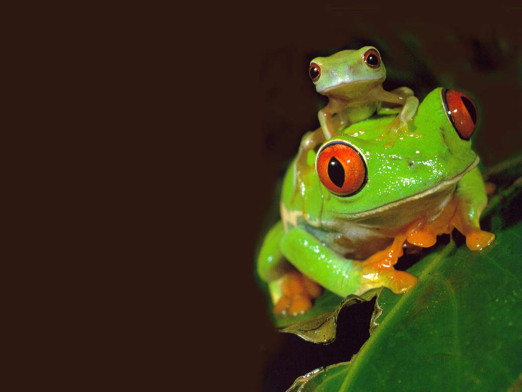cute frog with baby picture