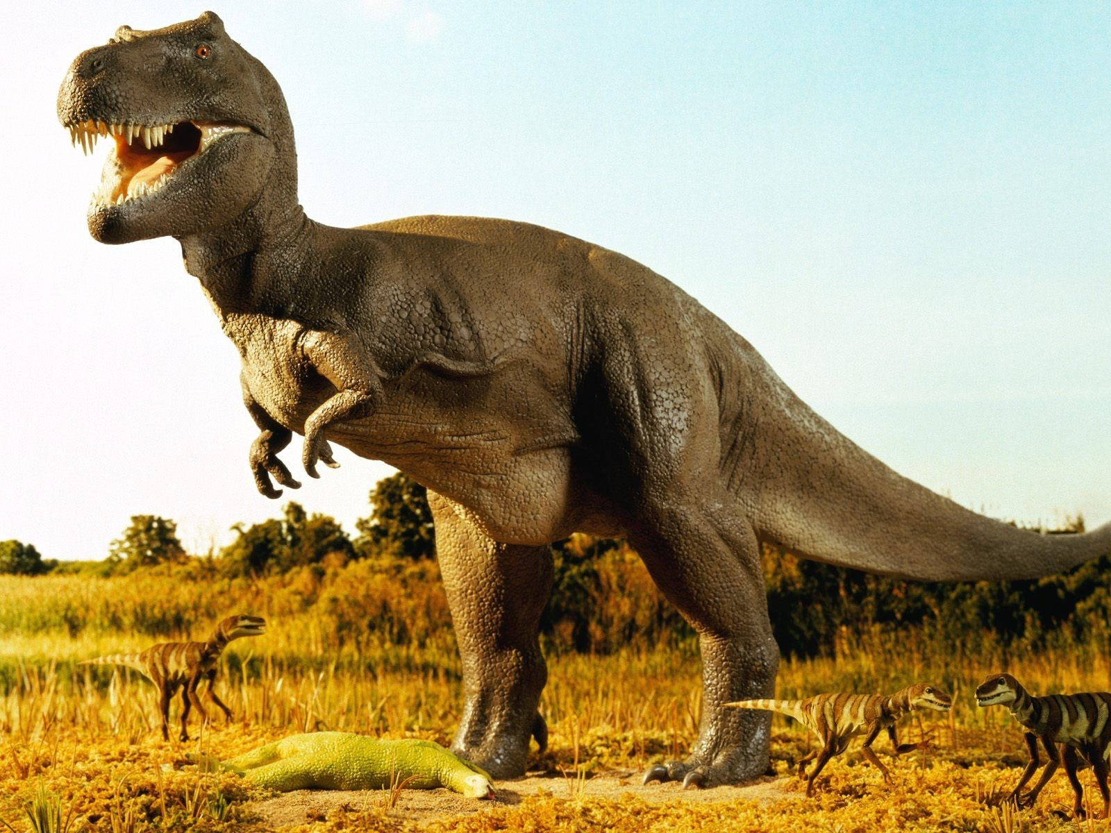 Pictures of Dinosaur