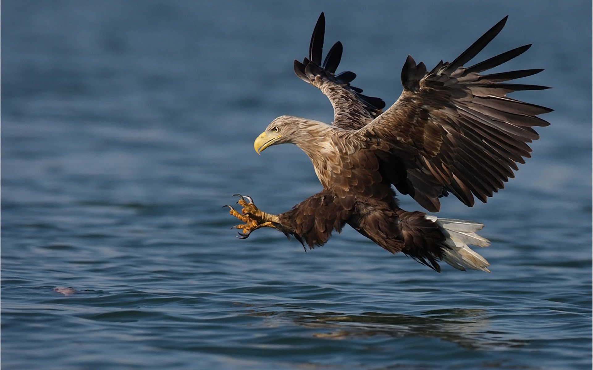 eagle on sea