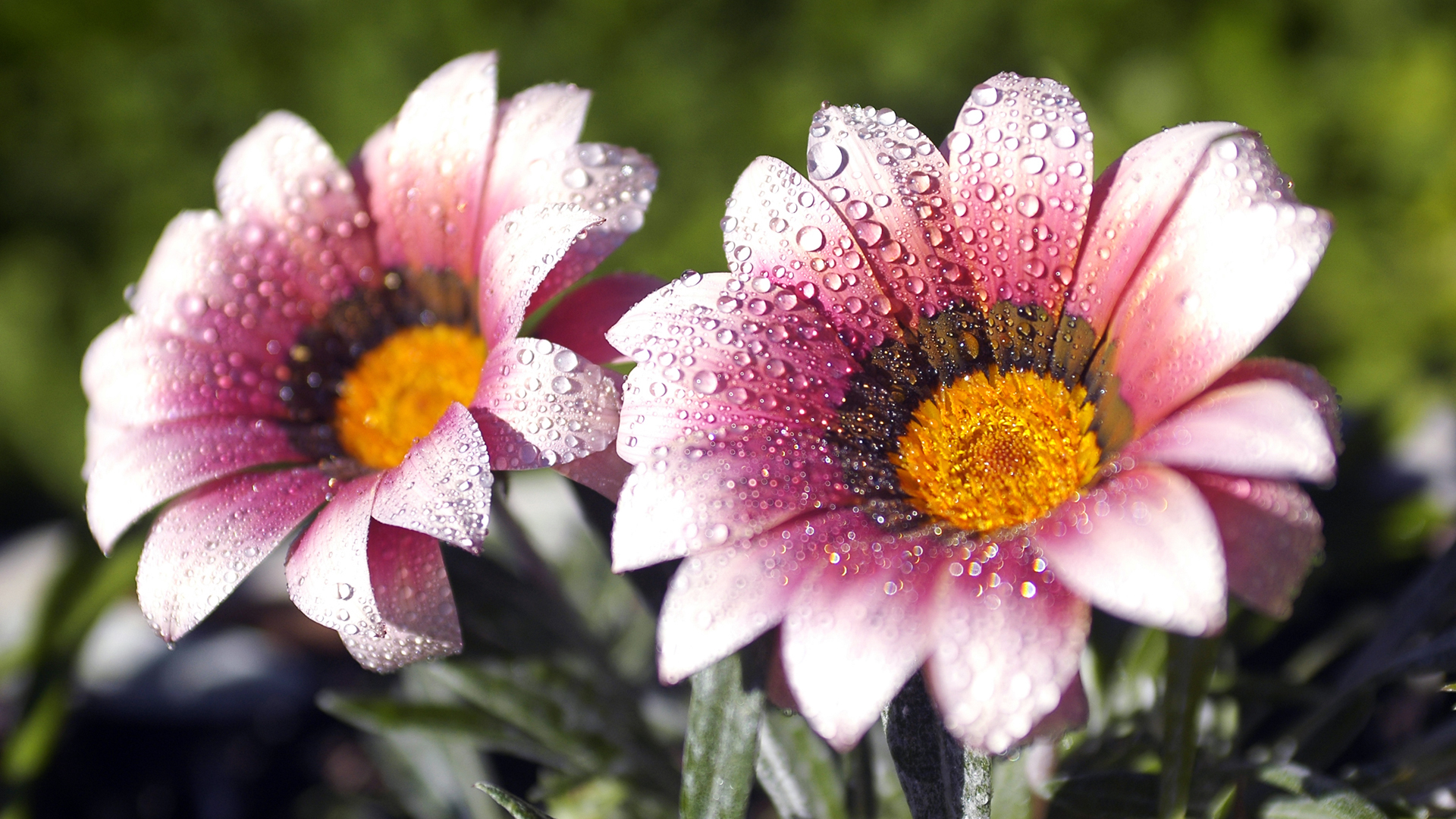 Flower Nice Wallpapers