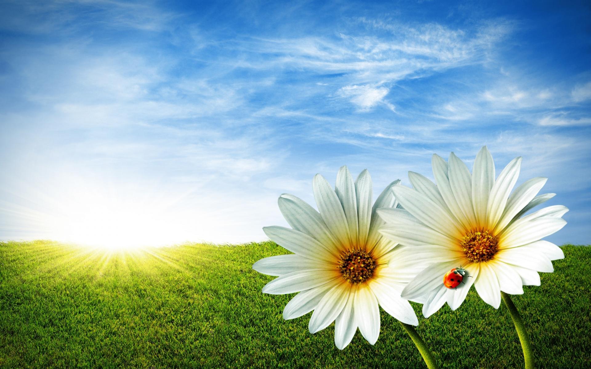 Fullscreen White Flowers Wallpapers For Mobiles