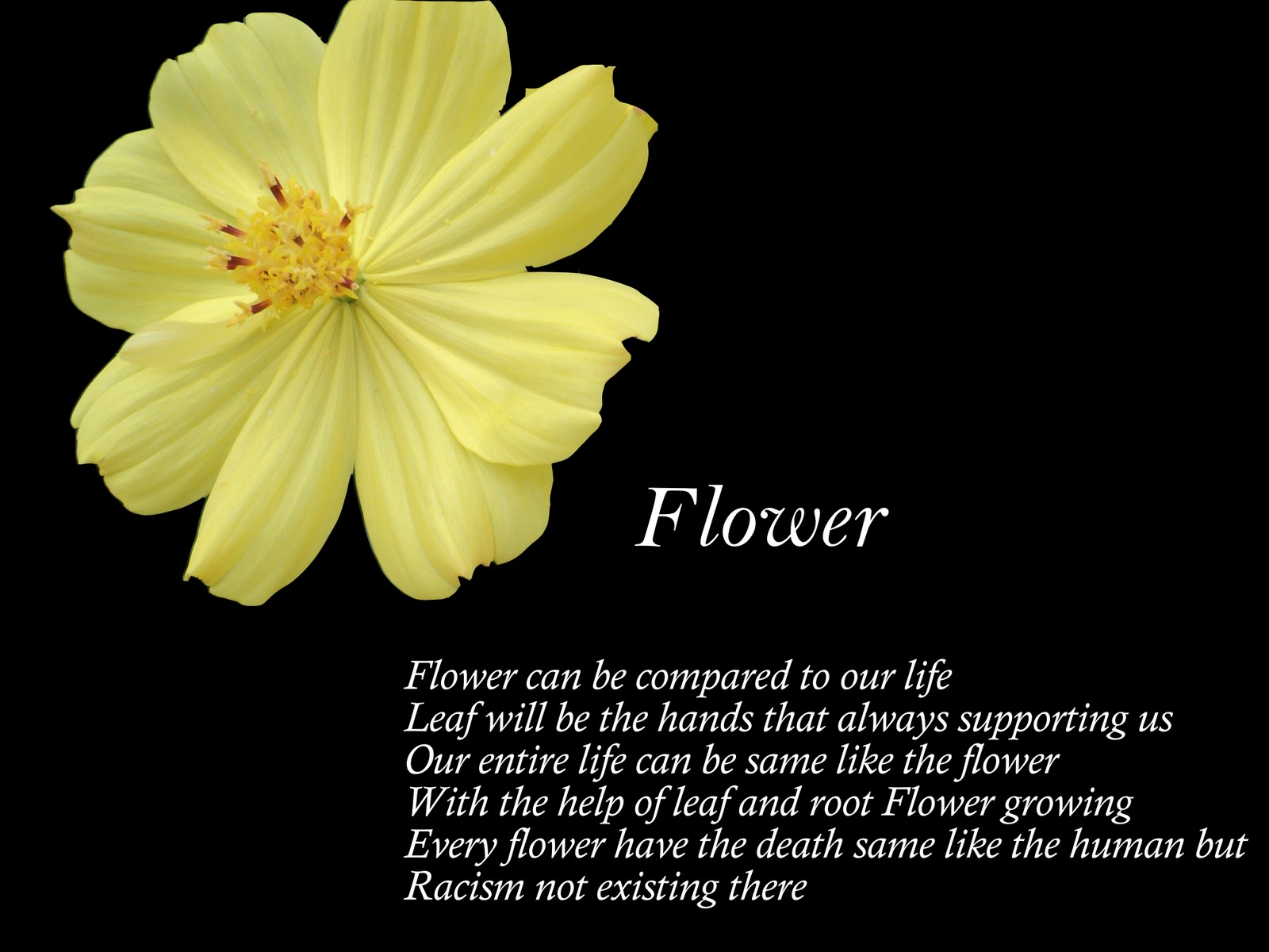 poems about flowers