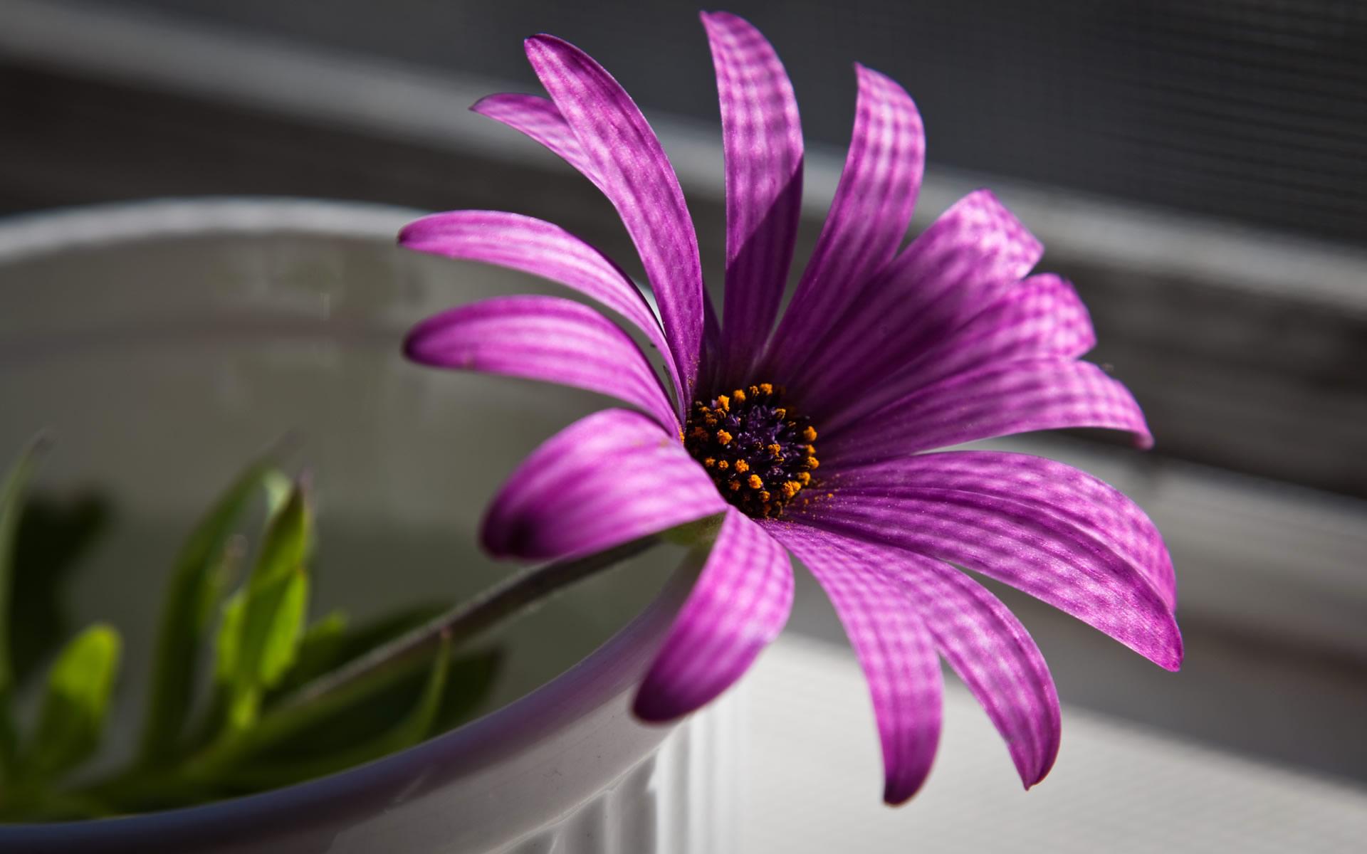 Purple Cool Flower