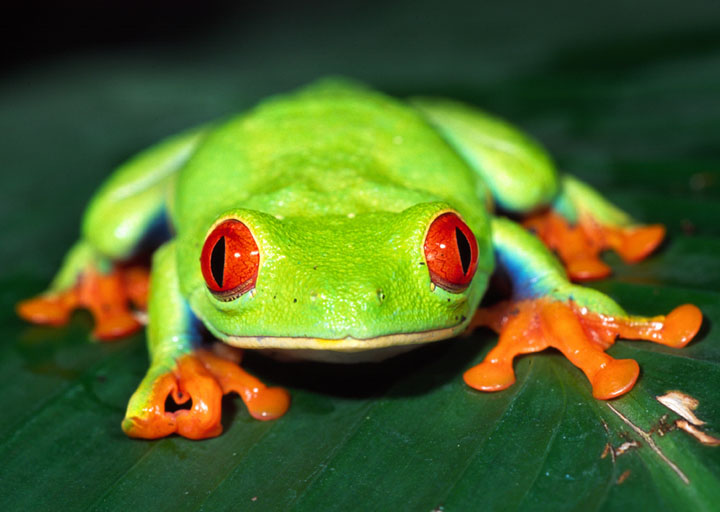FROG HIGH QUALITY WALLPAPER